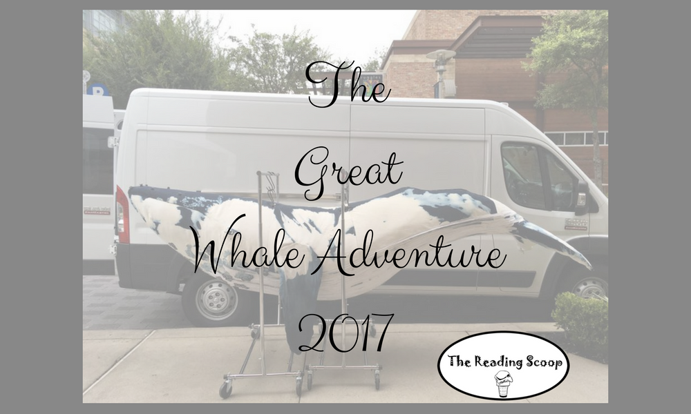 My Part in The Great Whale Adventure 2017